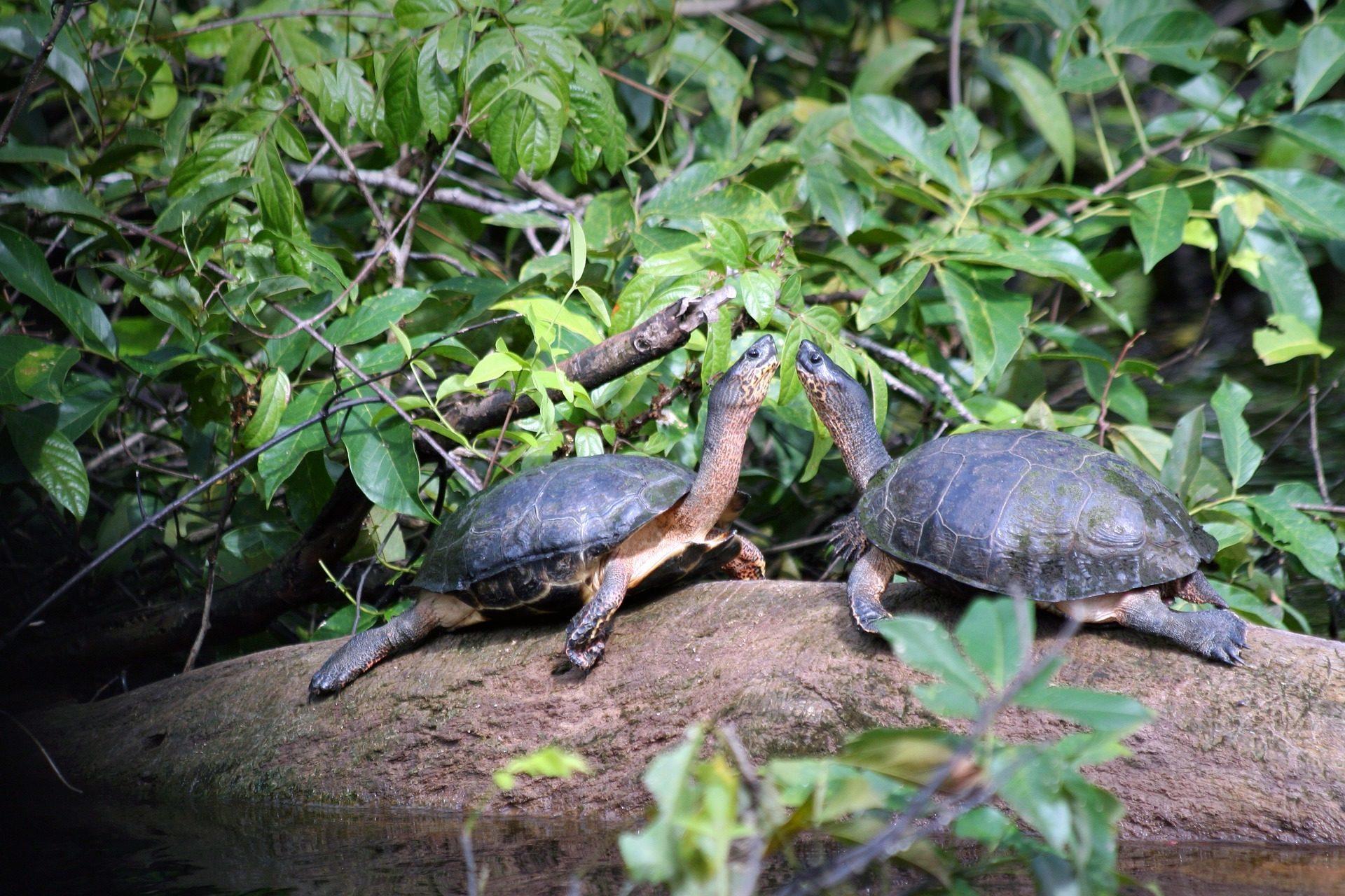 Tortuguero- Costa Rica- Milviajes