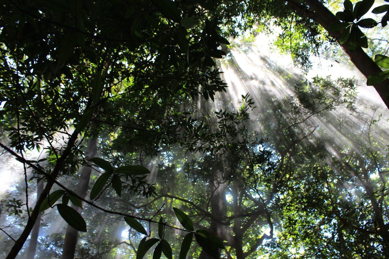 Monteverde - Costa Rica- Milviajes