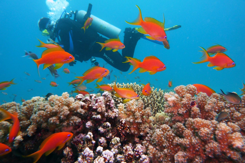 Bajo el Mar. www.milviajes.com