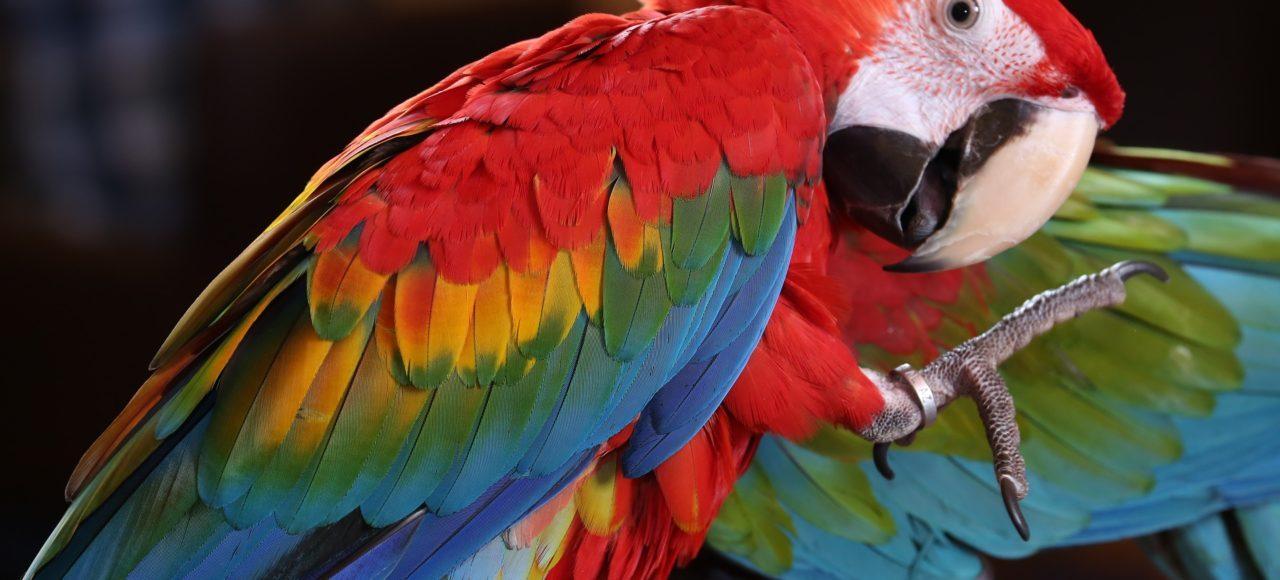 Guacamayo Costa Rica. www.milviajes.com