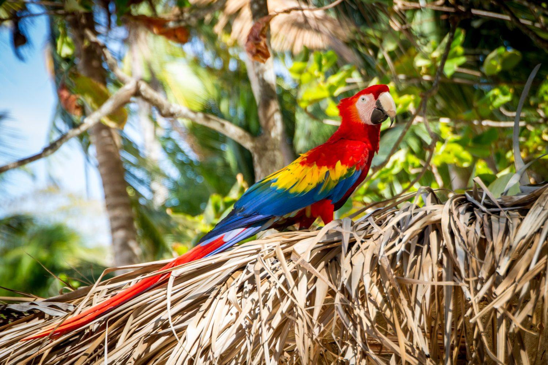 Loro Isla Tortuga. www.milviajes.com