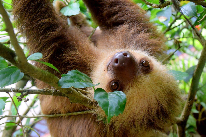 Perezoso Costa Rica. www.milviajes.com