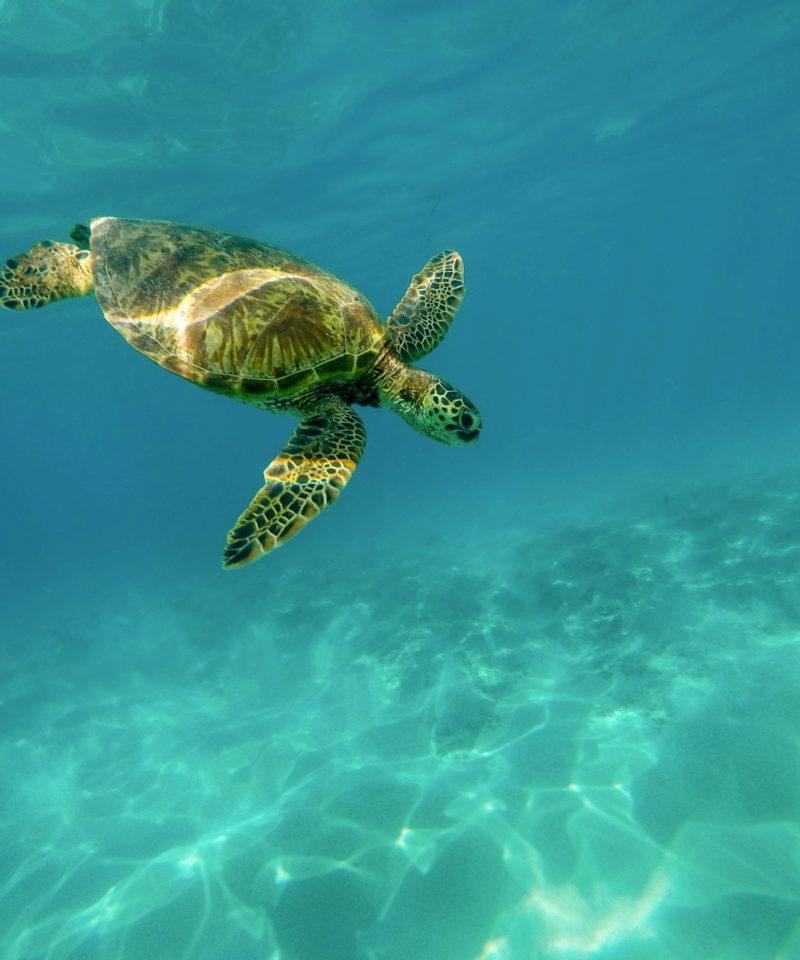 Tortuga Bajo el Mar. www.milviajes.com
